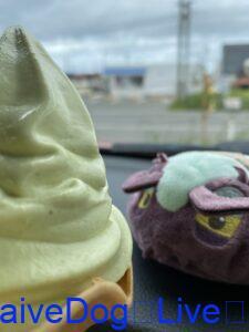 菜の花 ソフトクリーム