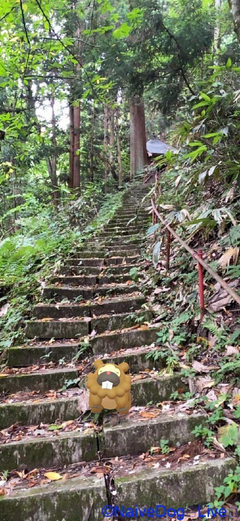ビッパと階段